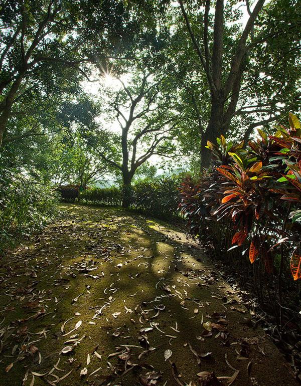 壁纸 风景 森林 桌面 600_770 竖版 竖屏 手机